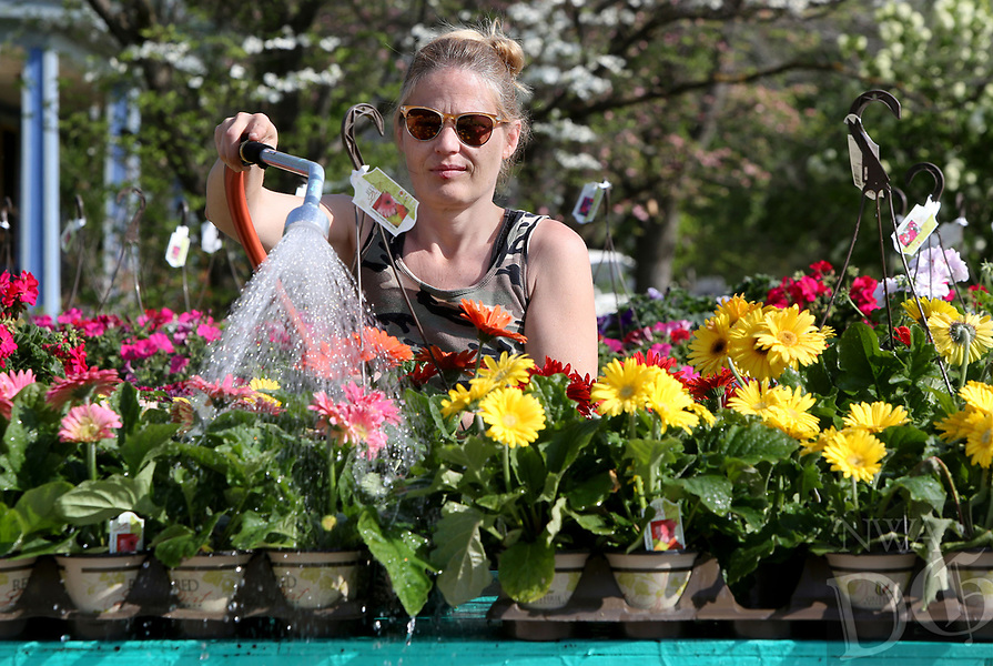 NWA Democrat-Gazette/DAVID GOTTSCHALK  Nursery worker Sue Kinsey waters Thursday, April 13, 2017, raised flower beds at Uptown Prairie Grove Mall. The new business offers a variety of items including art work and full seasonal garden supplies and plants.