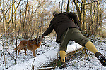 Pix: Shaun Flannery/shaunflanneryphotography.com...COPYRIGHT PICTURE>>SHAUN FLANNERY>01302-570814>>07778315553>>..19th December 2009................Brodsworth Shoot.A Golden Retriever dog retrieves a Pheasant to gun.