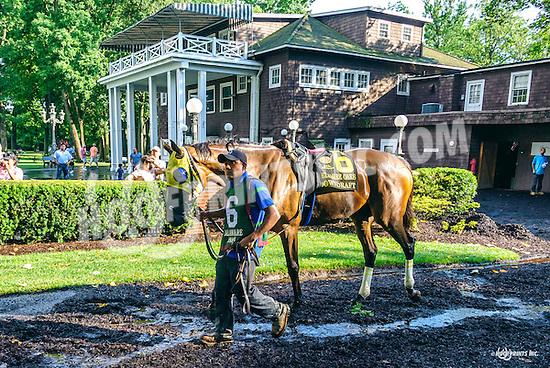 Downdraft before The Delaware Oaks (gr 3) at Delaware Park on 7/9/16