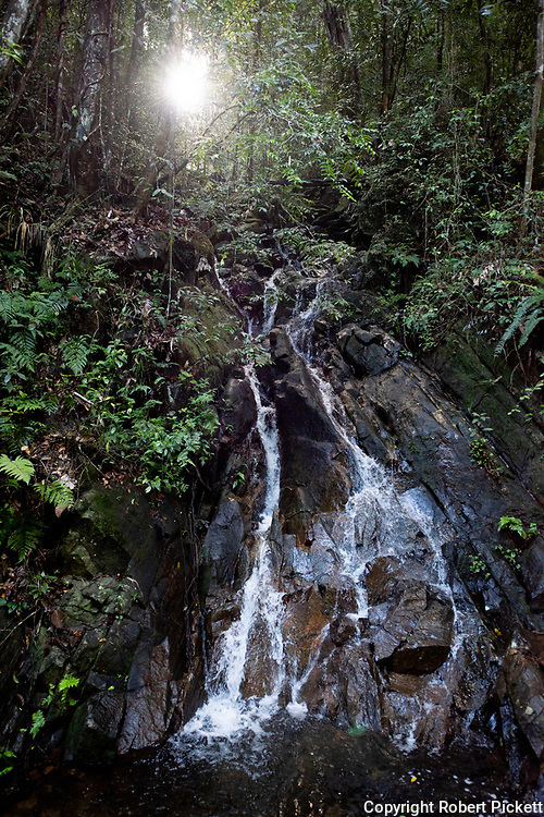 Rainforest waterfall, Sinharaja World Heritage Site, Sri Lanka