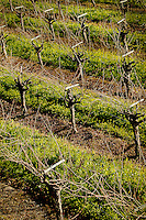 Sonoma County Images