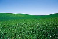 Lush green field.<br />