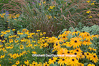 63821-23002 Black-eyed Susans (Rubeckia  fulgida  var. speciosa 'Viette's Little Suzy') and (Rudbeckia hirta 'Indian Summer')