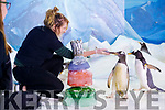Louise Overy, Dingle Oceanworld with 30 year old Hugh who is the oldest penguin in Ireland (the oldest in the world is 34).