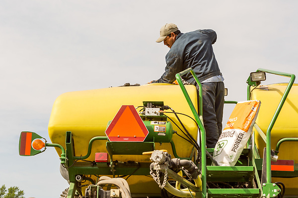 April 20, 2016. Rowland, North Carolina. <br />  Ricky Acosta, one of Bo Stone's full time employees, loads the seed bins on the farm's planting machine with GM corn from Pioneer. Acosta, who is from Mexico, has worked on the farm for 15 to 20 years.<br />  Bo Stone, age 44, runs a 2300 acre farm near the South Carolina border. After 5 generations of tobacco farming, Stone helped to move his family farm over to corn, wheat, soybeans, and strawberries 7 years ago. <br />  While his corn crop is entirely made up of stacked genetically modified strains of corn, Stone says he chose the varieties primarily for their yield characteristics, but having the ability to utilize their herbicide tolerant traits if a weed gets out of control is &quot;another tool in my toolbox&quot;.