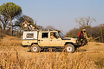 African Lion (Panthera leo) trackers, Christopher Muduwa and Timbo Frackson, looking for tracks during transect, with biologists, Luke Hunter and Xia Stevens, looking for herbivores, Kafue National Park, Zambia