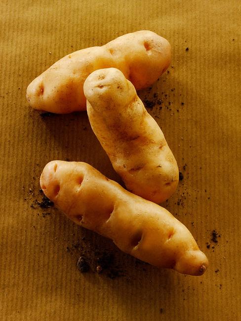 Fresh organic Anya  Potatoes