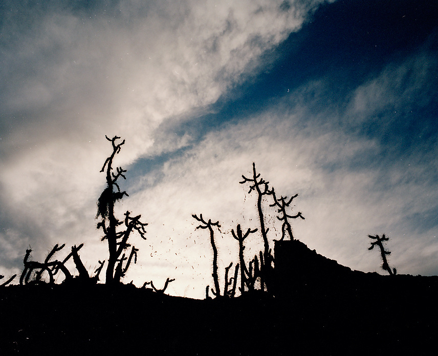 Peru, South America, southern hemisphere, Peruvian, Andean, Andes, cactus, cacti, silhouette, silhouetted, sky, clouds, dramatic, no people, horizontal. black, white, blue, simple, landscape, dark, shadow, contrast, vegetation, Cuzco
