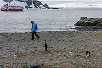 Antarctica expedition aboard the Hurtigruten FRAM ship. Chinstrap penguins at Half Moon Island. Half Moon Island is a two kilometer long (1.2 mile), crescent-shaped island in the shadow of the picturesque mountains and glaciers of nearby Livingston Island.