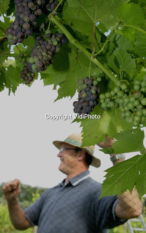 Foto: VidiPhoto..DIEREN - Wijnboer Youp Cretier plaatst donderdag bij Domein Hof te Dieren een net over een deel van zijn 2 ha. grote biologische wijngaard. De overlast van merels en spreeuwen is enorm. Vorig jaar hebben die voor een geschatte schade van 35.000 euro gezorgd. Domein Hof te Dieren is de grootste ommuurde wijngaard van Nederland. Door het natte weer is de oogst van Nederlandse wijnboeren dit jaar enkele weken later.