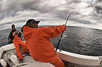 An asian fisherman in his late 50s dressed with a waterproof orange suit, is fighting a Bluefin Tuna in the waters of Cape Cod