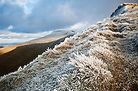 Frost covered grass near Corn Du, Brecon Beacons national park, Wales