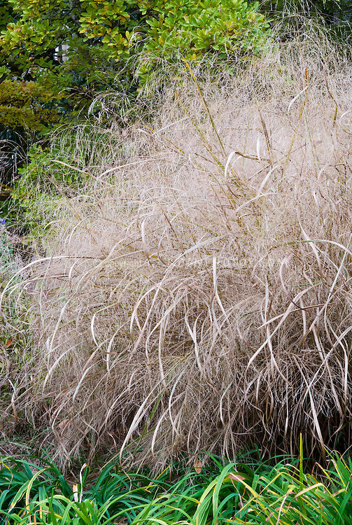 how to grow grass in the fall