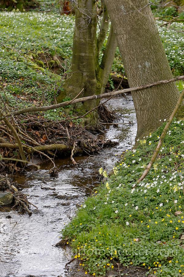 Kleiner Bach im Wald, Frühling