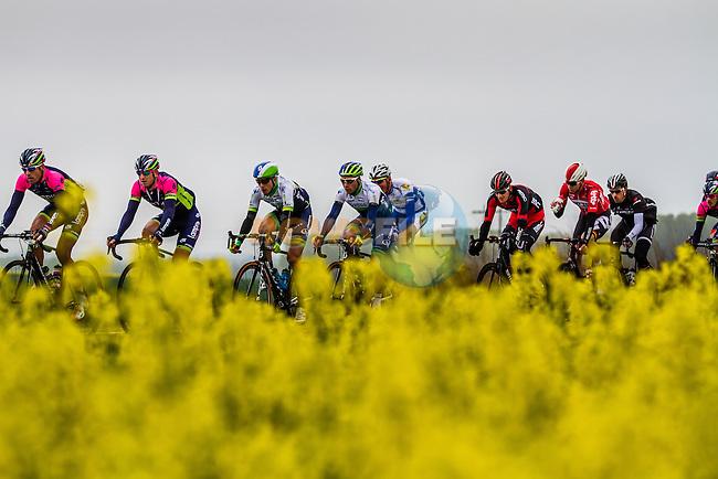 Orica-GreenEdge in the peloton near Noyon - Paris-Roubaix - 13th April 2014 - Photo by Thomas van Bracht / Peloton Photos