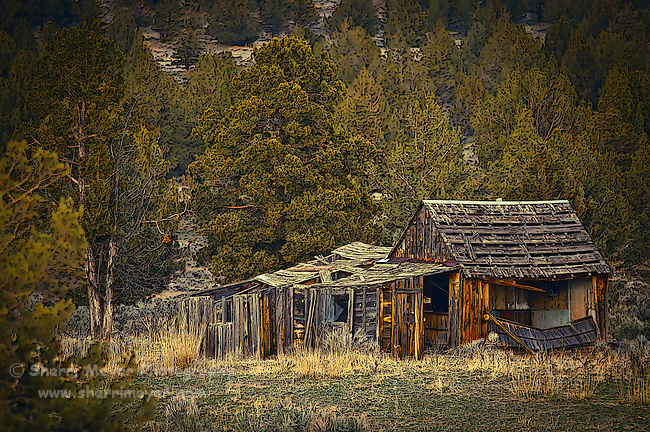 """Survivor 2"" - Old barn near Adin, Northeastern California."