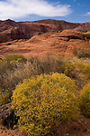 Snow Canyon State Park, Utah, UT, scenic of Red Kaibab sandstone with yellow saltbrush vegetation, rock formation, landform, arid, Southwest America, American Southwest, US, United States, Image ut404-18583, Photo copyright: Lee Foster, www.fostertravel.com, lee@fostertravel.com, 510-549-2202