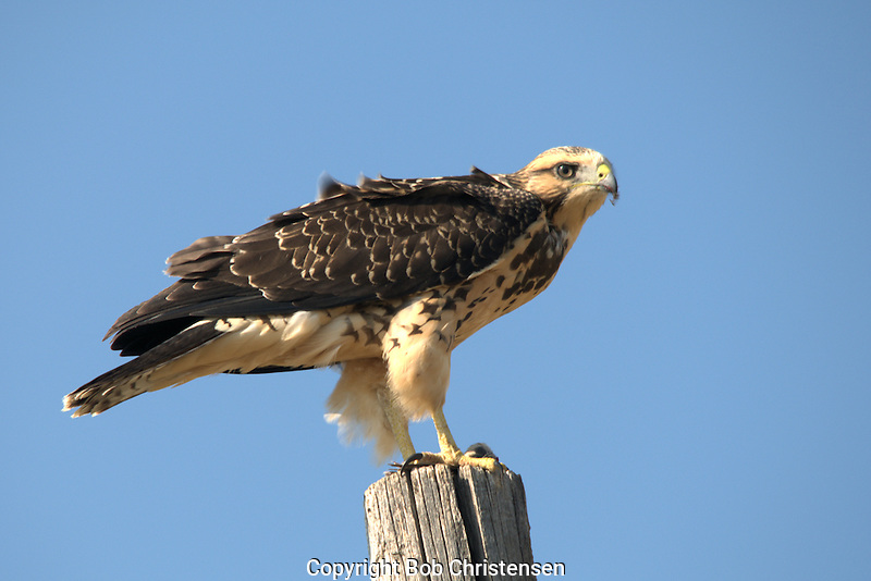 Wildlife Photos from Montana and Wyoming