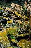 Rocks covered with moss, Fiordland National Park, South Island, New Zealand.