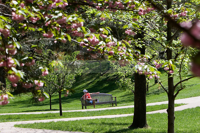 Spring on the University of Kentucky campus. Photo by David LaBelle