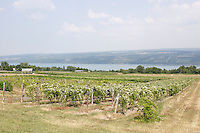FINGER LAKES VINEYARDS<br /> Overlooking Seneca Lake<br /> The 11 Finger Lakes all formed over the last two million years by glacial carving of old stream valleys.  Seneca Lake is one of the deepest in North America (below sea level.) New York