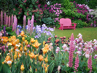 Garden chair and flower garden. Schrieners Iris Gardens, Salem, Oregon.
