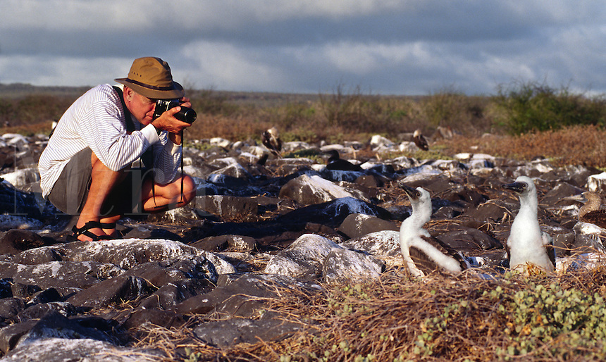 TOURIST photographing BLUE-FOOTED BOOBY BIRD (Sula nebouxii) on ISLA ESPANOLA - GALAPAGOS ISLANDS, ECUADOR  MR.