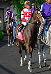 ARLINGTON HEIGHTS, IL - AUGUST 11 #8, Inflexibility,  before the G1 Beverly D S. at Arlington Park on August 11, 2018 in Arlington Heights, IL. (Photo by Jessica Morgan/Eclipse Sportswire/Getty Images)