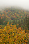 Oak trees turn color during autumn, Oregon