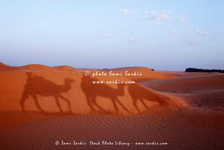 Men and camels shadows on sand dune, Tunisia, Ksar Ghilane, Sahara Desert