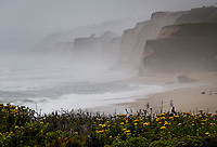 Looking north from Pescadero State Beach, the California coast is a series of sheer cliffs dropping hundreds of feet to the ocean below, drenched in fog and mist.