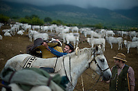 I mandriani si preparano per la transumanza attraverso il percorso del tratturo dalla puglia alle montagne di Frosolone in Molise..Cowboys lead the Colantuono family's herd along the road as they venture toward a cooler climate.