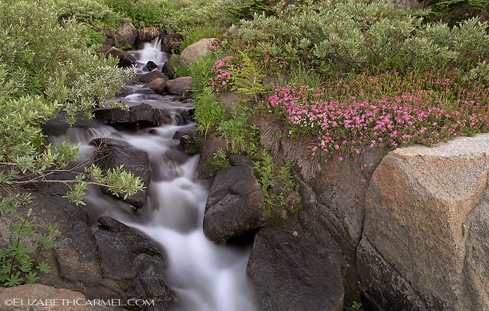 Creekside Bloom, Sierra Nevada