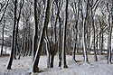 11/12/14<br /> <br /> Snow clings to freezing tree trunks near Newhaven, Derbyshire after<br /> overnight snow fall settles on hills in the Derbyshire Peak District.<br /> <br /> ***ANY UK EDITORIAL PRINT USE WILL ATTRACT A MINIMUM FEE OF &pound;130. THIS IS STRICTLY A MINIMUM. USUAL SPACE-RATES WILL APPLY TO IMAGES THAT WOULD NORMALLY ATTRACT A HIGHER FEE . PRICE FOR WEB USE WILL BE NEGOTIATED SEPARATELY***<br /> <br /> <br /> All Rights Reserved - F Stop Press. www.fstoppress.com. Tel: +44 (0)1335 300098