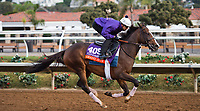 DEL MAR, CA - OCTOBER 02: Grand Jete, owned by Juddmonte Farms, Inc. and trained by Chad C. Brown, exercises in preparation for Breeders' Cup Filly & Mare Turf at Del Mar Thoroughbred Club on November 2, 2017 in Del Mar, California. (Photo by Anna Purdy/Eclipse Sportswire/Breeders Cup)