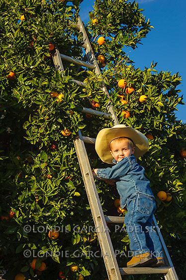 Little guy picking oranges on the ranch, San Luis Obispo, California