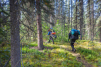 Backpackers on a trail in the forest along the Arrigetch creek, Arrigetch Peaks, Gates of the Arctic National park, Alaska.