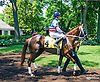 Summertime Thunder with Zoe Valvo aboard in the paddock before the Longines International Ladies Fegentri Amateur race at Delaware Park on 6/8/15