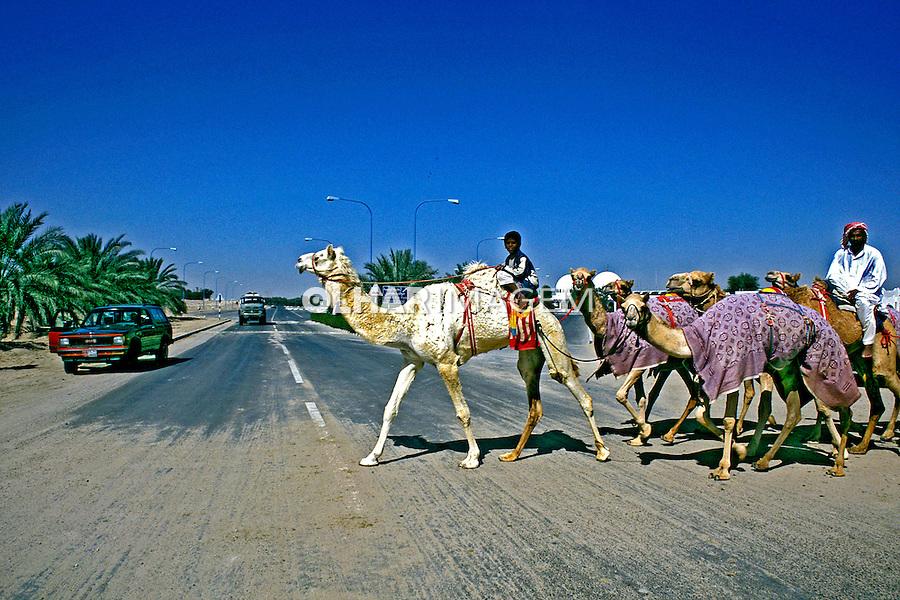 Dromedários na estrada em Abu Dhabi, Emirados Árabes. 2001. Foto de Ricardo Azoury.