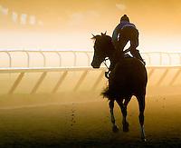 Rachel Alexandra and Dominic Terry, on a foggy Oklahoma track, Saratoga 2009 Scenic, horse racing, mood, beautiful, action, racehorse, horse, equine, racetrack, scene