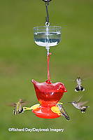 01162-12514 Ruby-throated Hummingbirds (Archilochus colubris) at feeder with ant guard,  Marion Co.  IL