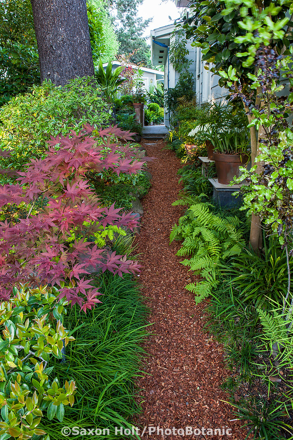 Bark mulch path in side yard leading into California plant collector garden - Carol Brant