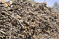 - Abbiategrasso (Mi), impianto per lo sfruttamento di biomasse (legname di scarto) per la produzione di energia elettrica, acqua calda per il teleriscaldamento e pellets (combustibile ecologico);....- Abbiategrasso (Mi) plant for exploitation of biomass (wood waste)  to produce electricity, hot water for district heating and pellets (ecological fuel )