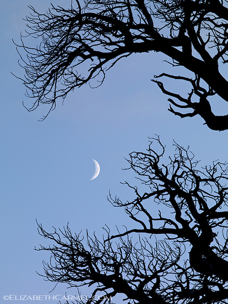 Crescent Moon & Foxtail Pine