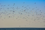 Seascape with gulls flying in summer sky