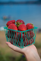 Small basket of strawberries form Sausalito farmers market, California, USA