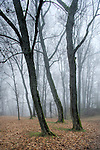 Forest near Lielvarde. Latvia.