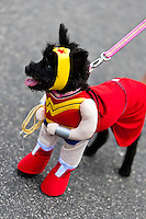 A dog, wearing a fancy Superhero costume, takes part in the Blocao pet carnival show at Copacabana beach in Rio de Janeiro, Brazil, 12 February 2012.