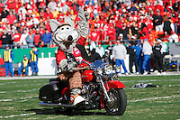 Chiefs mascot KC Wolf rides a Harley on to the field before the game with the Oakland Raiders at Arrowhead Stadium in Kansas City, Missouri on November 19, 2006. The Chiefs won 17-13.