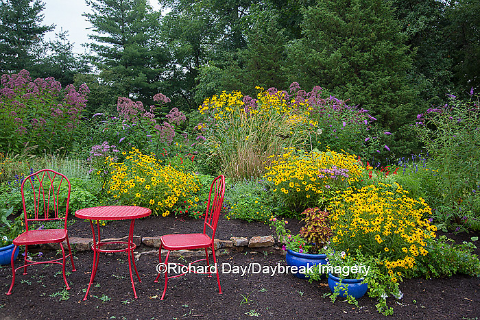 63821-231.11 Flower garden with red table and chairs.  Black-eyed Susans, Joe-Pye-Weed,  and Butterfly Bushes. Marion Co. IL